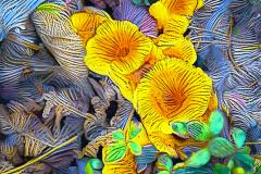 Fungus_H